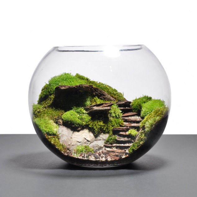 Adult Adventures Plant A Terrarium New Canaan Chamber